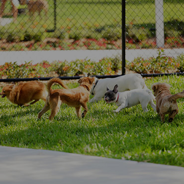 Large Dog Park at Lotus Apartments